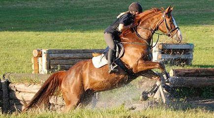 besoeg-glad-kalundborg-ved-kalundborg-horse-event-1